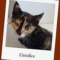 Adopt A Pet :: Candice - Tombstone, AZ