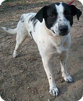 Border Collie Mix Dog for adoption in Harrisonburg, Virginia - Jazzy (Reduced Adoption Fee)