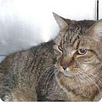 Adopt A Pet :: Brownee - Colmar, PA