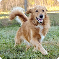 Adopt A Pet :: Ramsey - New Canaan, CT