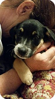 Labrador Retriever Mix Puppy for adoption in Sagaponack, New York - Lola
