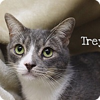 Adopt A Pet :: Trey - Foothill Ranch, CA
