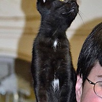Adopt A Pet :: Ruth - Albemarle, NC