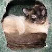 Adopt A Pet :: Simba - Powell, OH