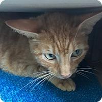 Adopt A Pet :: Luke - Dalton, GA