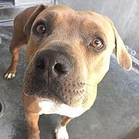 Adopt A Pet :: Gilda Meyer - Seattle, WA
