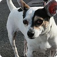 Adopt A Pet :: Mr. Peabody - Canoga Park, CA
