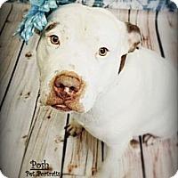 Adopt A Pet :: Goobies - Houston, TX