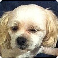 Adopt A Pet :: Brady-PA - Mays Landing, NJ