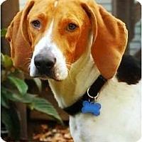 Adopt A Pet :: Aruba - Dallas, TX