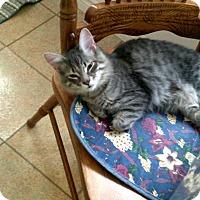 Adopt A Pet :: Logan - london, ON