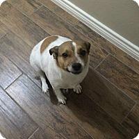 Adopt A Pet :: Trish in Spring, TX - Austin, TX