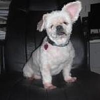 Adopt A Pet :: Blanche (FL) - Largo, FL