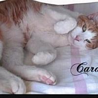 Adopt A Pet :: Caramel - Calimesa, CA