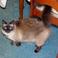 Adopt A Pet :: Alcyone (& Asterope) - Herndon, VA