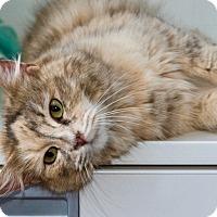 Adopt A Pet :: Ms Wiggles - Novato, CA