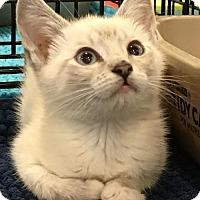 Adopt A Pet :: LINDSEY - Lakewood, CA