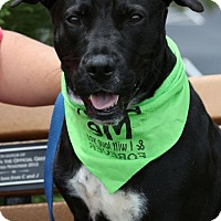 Labrador Retriever Mix Dog for adoption in Alpharetta, Georgia - Annabell Barbie