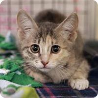 Adopt A Pet :: KALI - Kyle, TX