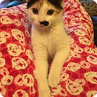 Adopt A Pet :: Scarlett - Butner, NC