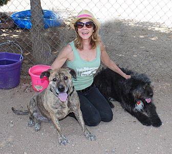 Tibetan Terrier Mix Dog for adoption in Toluca Lake, California - Tibby & Zena