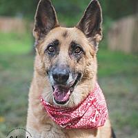 Adopt A Pet :: Kaija - Houston, TX
