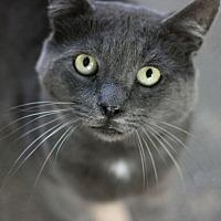 Adopt A Pet :: Bodie - Canoga Park, CA