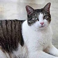 Adopt A Pet :: BEAUTIFUL - Austin, TX
