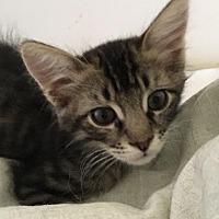 Adopt A Pet :: Barney - Parlier, CA