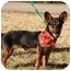 Photo 3 - Corgi/Dachshund Mix Dog for adoption in Cranford, New Jersey - Corky