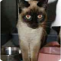 Adopt A Pet :: Lily & Lilac - Arlington, VA