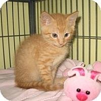 Adopt A Pet :: Laramie - Shelton, WA
