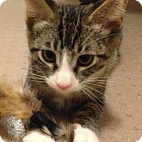 Adopt A Pet :: Betsy - Chandler, AZ