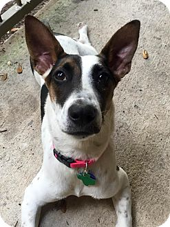 Terrier (Unknown Type, Small) Mix Dog for adoption in Austin, Texas - Keeley