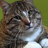 Adopt A Pet :: Noah - St. Louis, MO