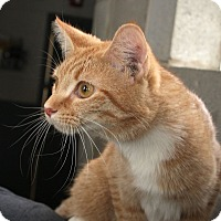 Adopt A Pet :: Adrian - Anderson, IN