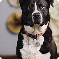 Adopt A Pet :: Oden - Portland, OR