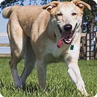 Adopt A Pet :: TRIGGER - Elyria, OH