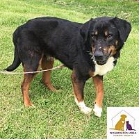 Adopt A Pet :: Joseph - Eighty Four, PA