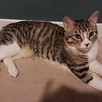 Adopt A Pet :: Sunny - Sherman Oaks, CA