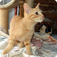 Adopt A Pet :: Peter - Richmond, VA