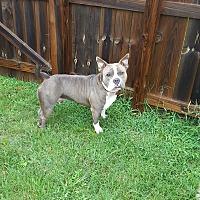 Adopt A Pet :: Tiny - Clarksville, TN