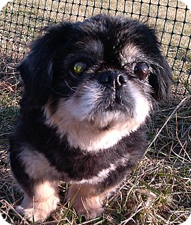 Pekingese Dog for adoption in Hagerstown, Maryland - Flo
