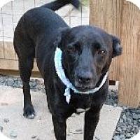 Adopt A Pet :: Fern - Pineville, NC