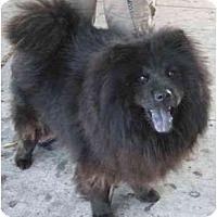 Adopt A Pet :: Bear - Riverside, CA