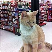 Adopt A Pet :: Maxime - Phoenix, AZ