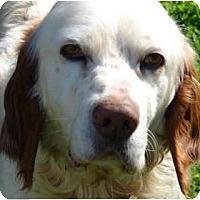 Adopt A Pet :: Rusty - Afton, TN