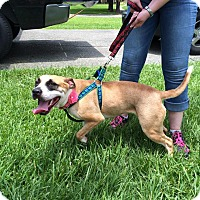 Pit Bull Terrier Mix Dog for adoption in Lake Charles, Louisiana - Abby