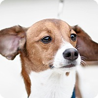 Adopt A Pet :: Jax - Holmes Beach, FL