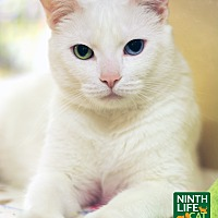 Adopt A Pet :: Stacey - Oakville, ON